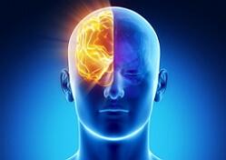 Нейропсихология